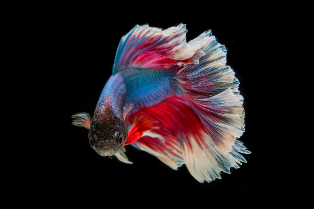 Jakie rybki do akwarium wybrać?