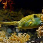 Żółta dziwna ryba