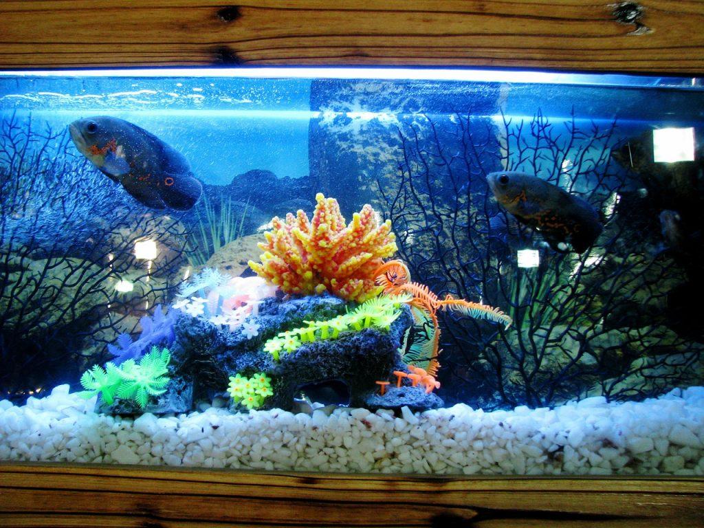 Domki dla rybek - jak wybrać najlepszy?