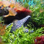 Murena w akwarium