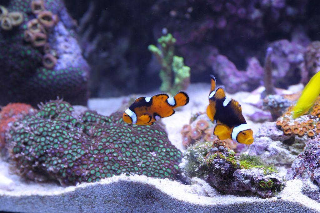 Rybki akwariowe - co należy wiedzieć przed stworzeniem domowego akwarium?
